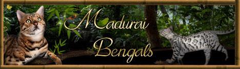 Madurai Bengals