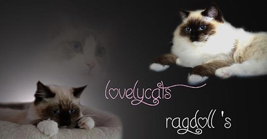Lovelycats Ragdolls