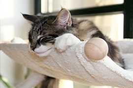 Bettchen, Hängematten & Katzenkörbchen von Pet Fun